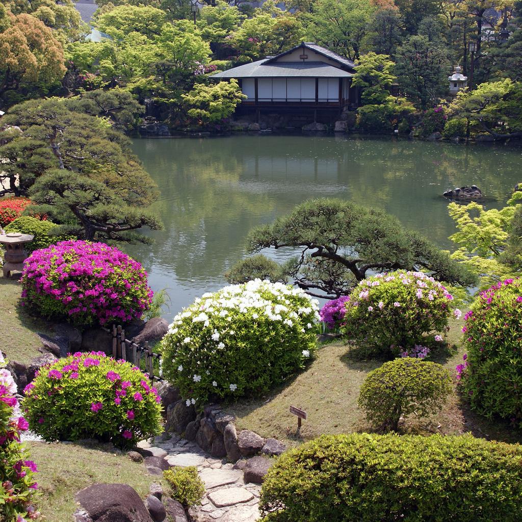 Почему сотни тысяч людей выбирают сад с прудом?