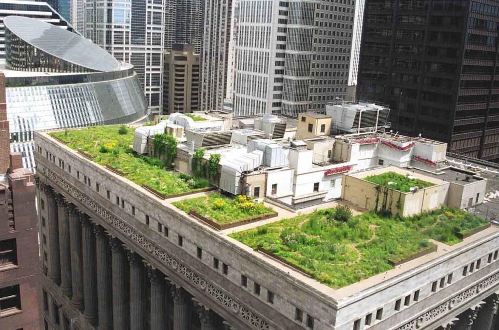 озеленение крыши фото