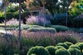 Почему многие так любят  сад в средиземноморском стиле?